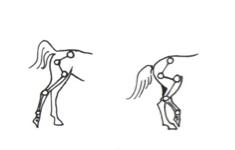 buiging-beideachterbenen