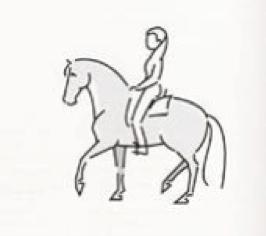 paard-evenwicht