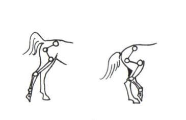 scheefheid-achterbenen
